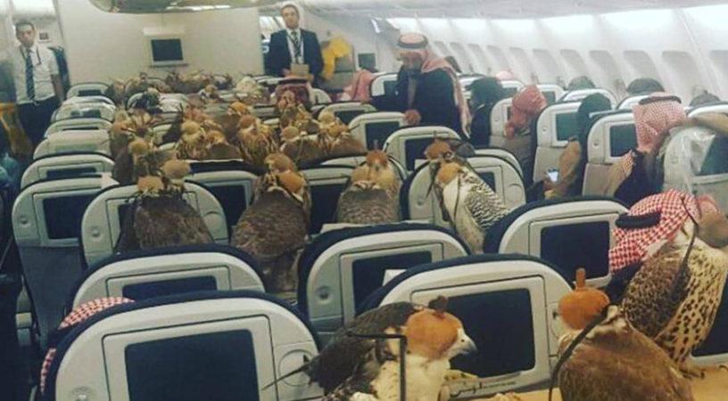 Саудовский принц выкупил 80 мест в авиалайнере для транспортировки соколов